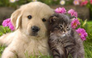 هناك حيوانات لا نعتمد عليها لكنها تجعل الحياة أفضل